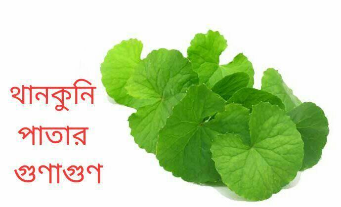 থানকুনি পাতার গুণাগুণ