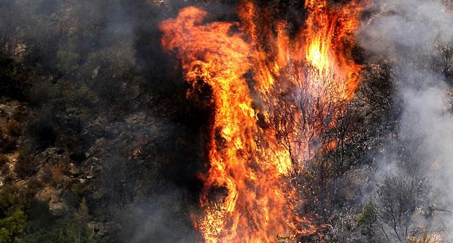দাবানল মোকাবিলায় আন্তর্জাতিক সম্প্রদায়ের সাহায্য চেয়েছে লেবানন