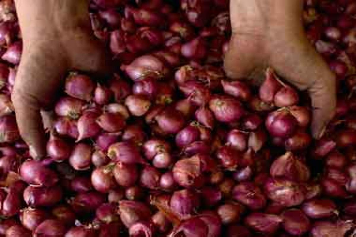 ১০০ টাকা ছুঁয়েছে পশ্চিমবঙ্গে পেঁয়াজের দাম