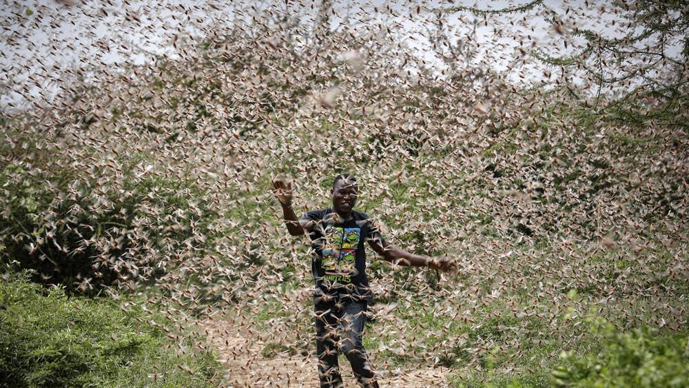 আফ্রিকা থেকে ধেয়ে আসছে আরেকটি পঙ্গপালের একটি বিশাল ঝাঁক