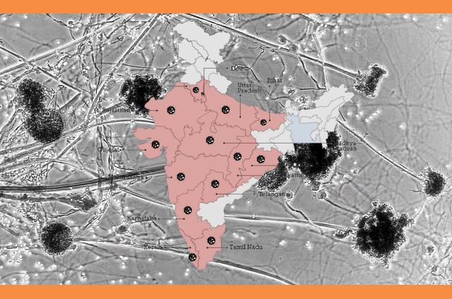 দেশে ব্ল্যাক ফাঙ্গাসে আক্রান্তর সংখ্যা বেড়ে ১১,৭১৭ জন